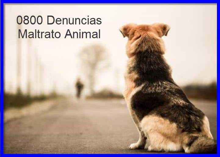 0800 Denuncia maltrato animal